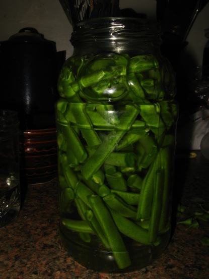 Fermenting time! One of my family favorites, live cultured green beans :)