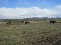 2013.20.3 - Declo, Idaho