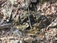 the beautiful babbling creek