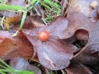 weird sphere I found stuck to a leaf, I think its some kind of egg sack :)