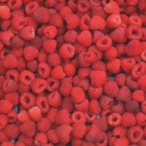 http://www.starkbros.com/products/berry-plants/raspberry-plants/heritage-red-raspberry