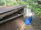 Rainbarrel, connected to the chicken coop roof