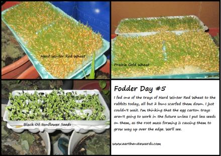 Fodder Day 5