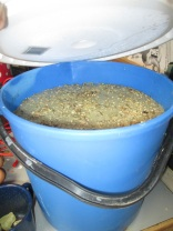 I put 4 quarts of feed in this bucket, and filled the bucket with water. I now have almost 9 quarts of feed to give them.