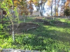 Here are the beds in the orchard, last week Tim wheelbarrowed a whole bunch of rabbit manure out to these mounds and built them up so nice and pretty... the chickens tore them apart, ruining all his hard work.