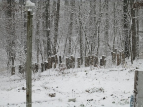 Our mushroom garden buried in snow