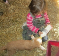 2015/02/07 our second visit they got to bottle feed the kids and play with them