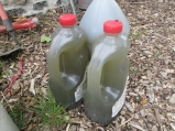 Rocky Hollow Gardens presents, Comfrey Compost Tea: Liquid Fertilizer. Organic, concentrated, wholesome and home grown.