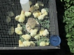 This one you can see the thermometer, the chicks are staying plenty warm in the sun.