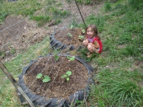 Marlee with our new cucumber beds, planted also with bush beans and marigolds.