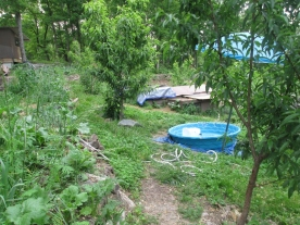 Looking in the trailhead to the orchard. You see the kid's pool and the Orchard Colony.